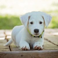 What to Expect from Your Puppy