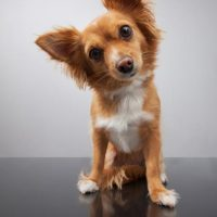Is Dog Boarding Right for Your Dog?