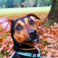 Dealing with Dogs with Noise Phobias