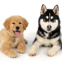 Puppies Aren't Blank Slates