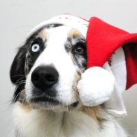 Holiday Pet Safety – Parties