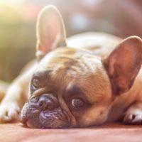 Dog Boarding Test Runs: Determining Who Fido Is