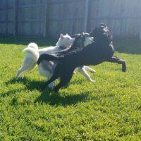 Dog Boarding & Doggie Daycare: Video