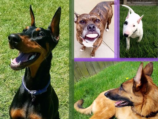 We provide dog training, dog walking & dog sitting services for Northern KY.
