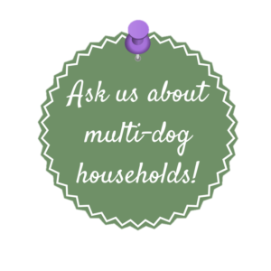 Our NKY dog walking service can help families with more than one dog with their dog walking needs!