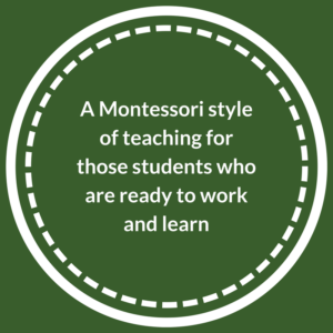 Montessori style dog training programs